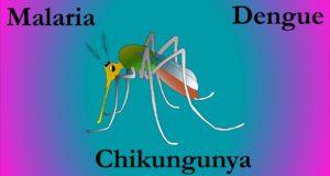 डेंगू और चिकनगुनिया का किचन में मौजूद है रामबाण इलाज | Dengue and Chikungunya remedies in your kitchen