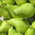 नाशपाती के नुस्खे भी उतने ही गुणकारी जितने की सेब के नुस्खे, naashpati ke nuskhe bhi utne hi gunnkari jitne ki seb ke nuskhe