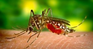 जानिये मच्छरों के प्रकोप से बचने के नुस्खे , How to live safe from Mosquitoes and Flies