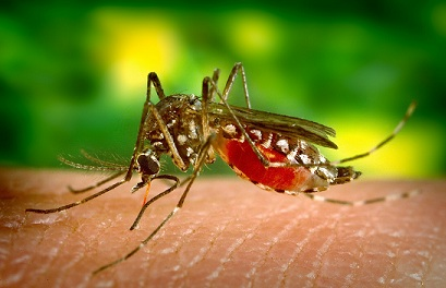 How to live safe from Mosquitoes and Flies